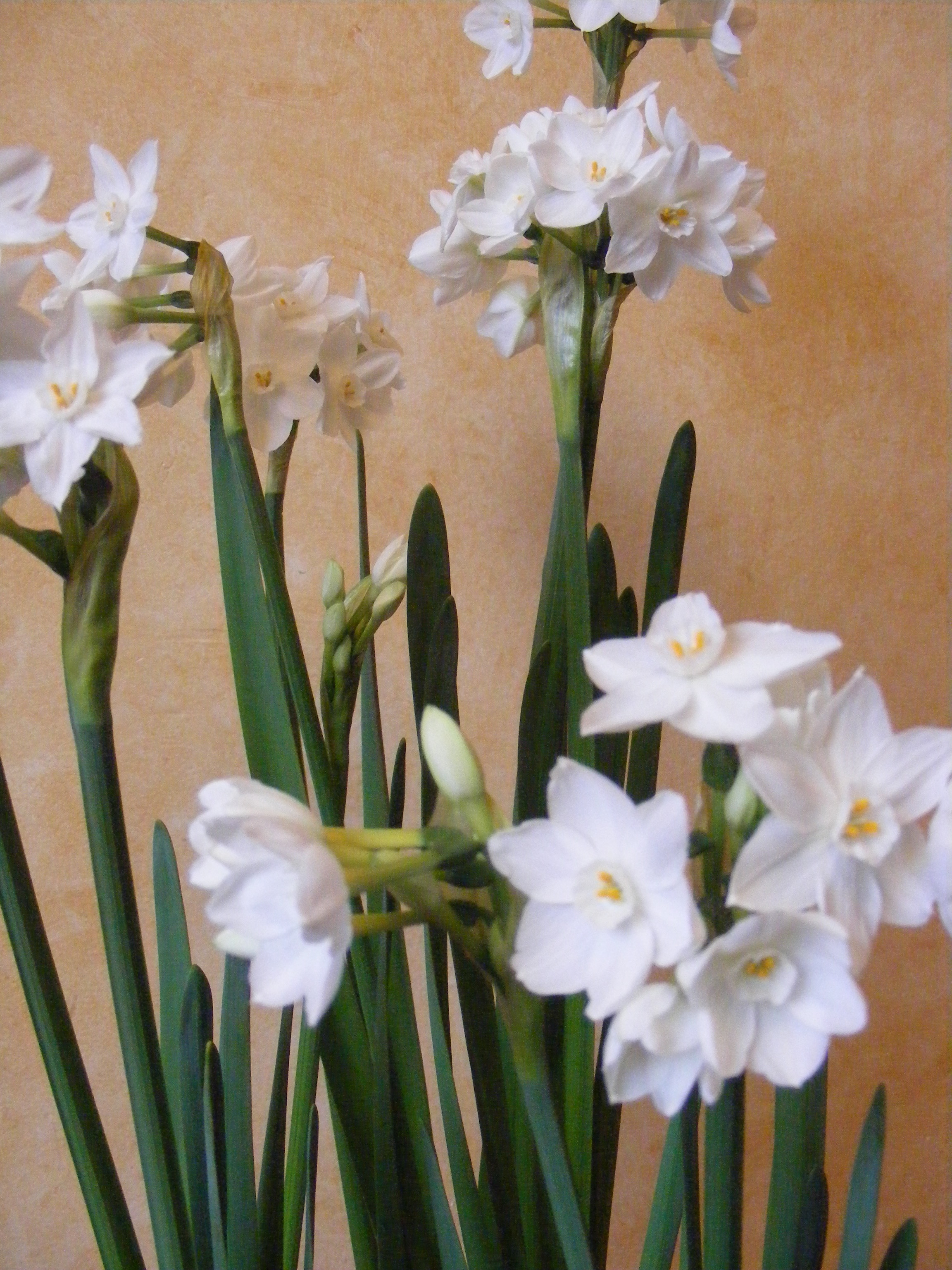 Plant Paperwhite Bulbs For Simple Decor Mollyinseattle